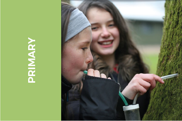 Download Ireland's yearbook of Education